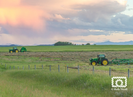 Tractors rest in the field after a long day's work putting hay up