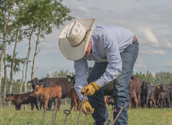 A cowboy grabs a branding iron from the fire at a branding