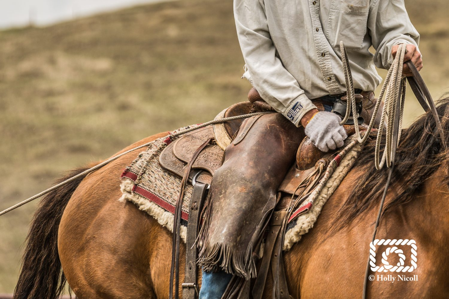 ranch work with cowboy and horse