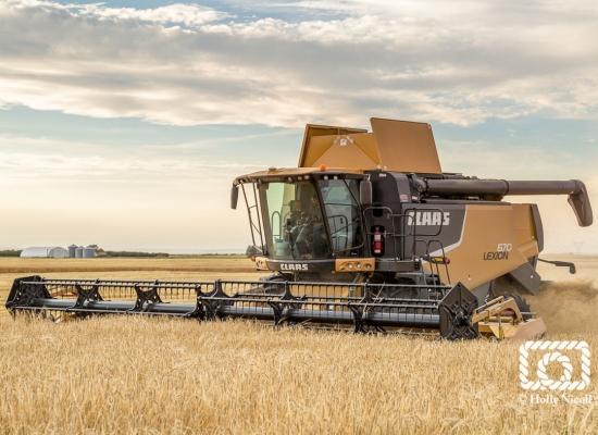 A combine harvesting malt barley