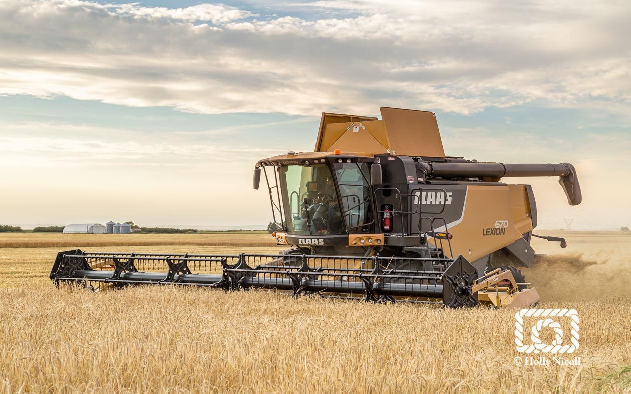 A Claas combine harvesting malt barley