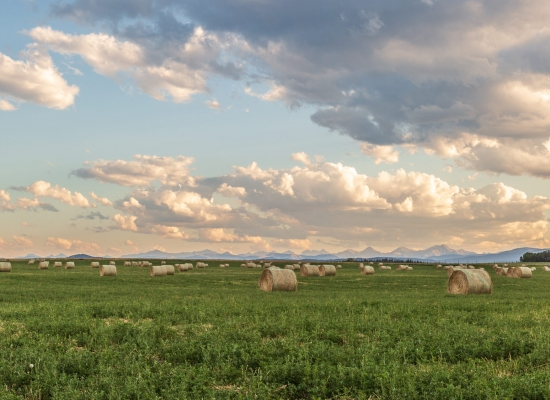 Round hay bales sit in a field with cloudy skies and mountains