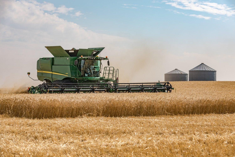 Harvesting Canadian wheat