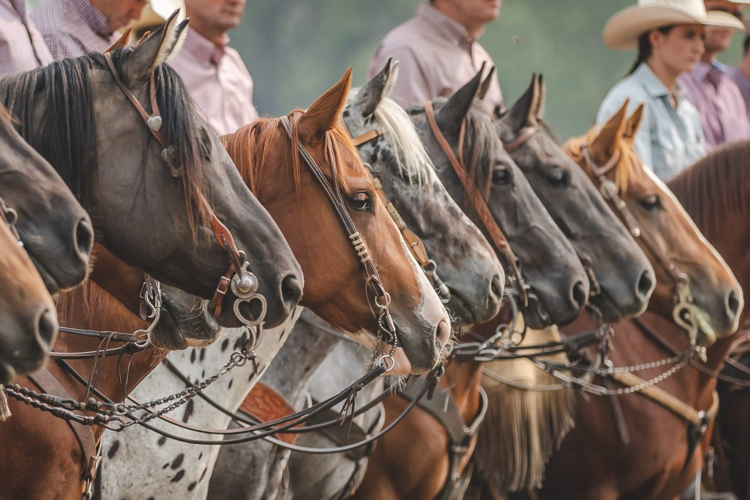 Ranch Horses Line Up Waiting To Compete Holly Nicoll Photography