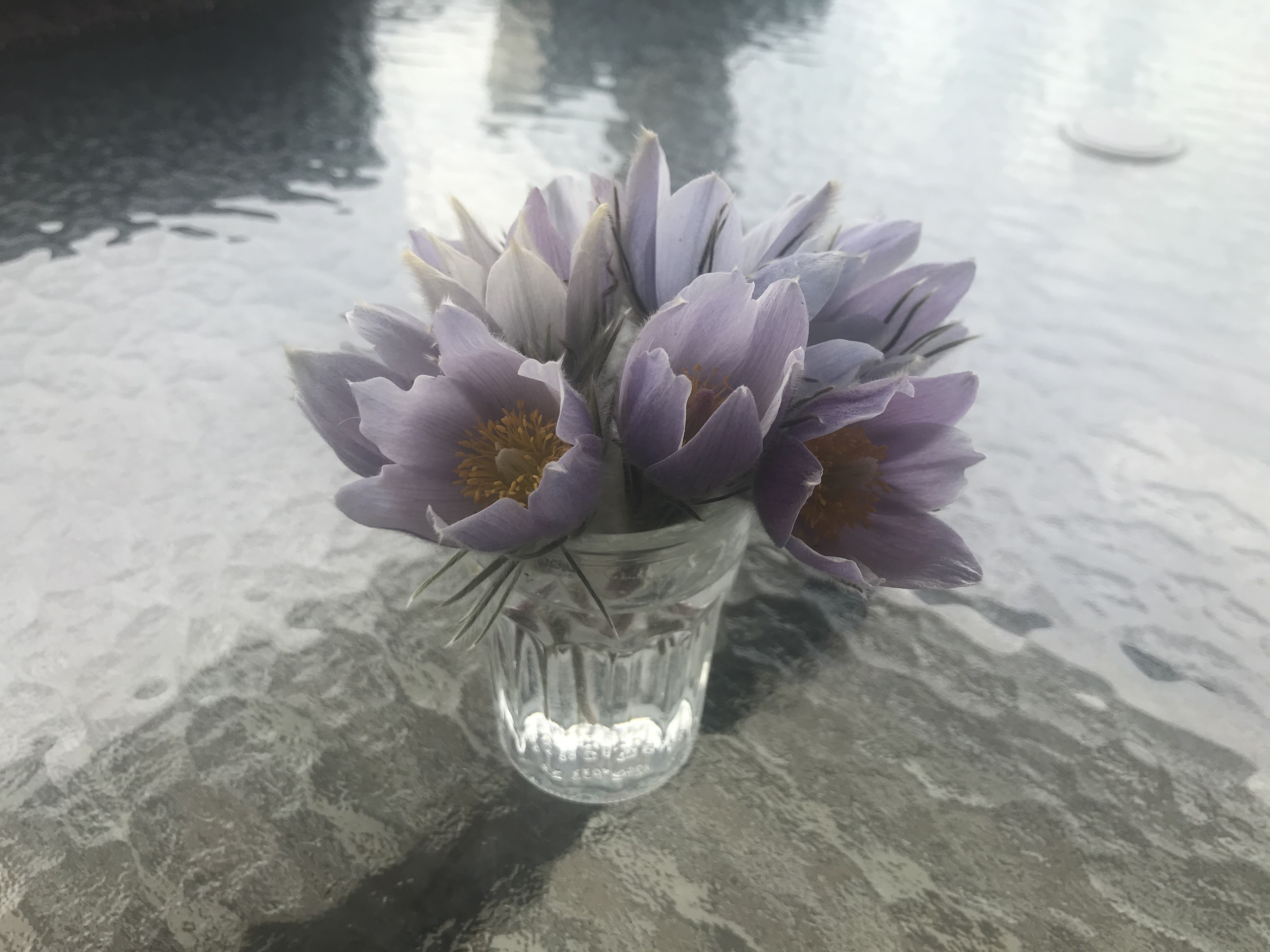 Crocus bouquet on the table