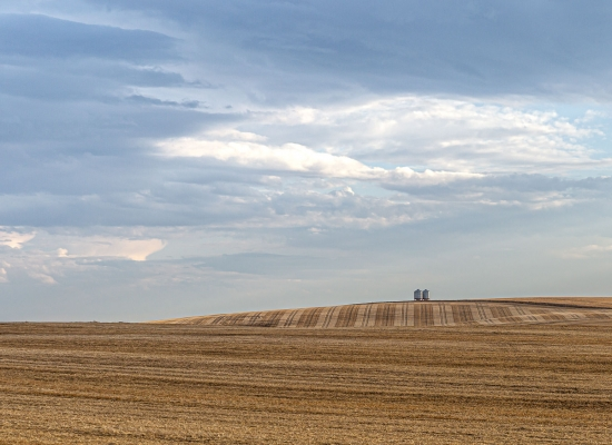 A pair of grain bins watch over a stubble field